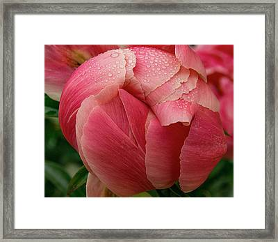 Framed Print featuring the photograph Peony Detail by Jean Noren