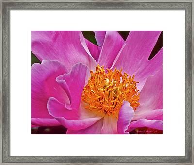 Pink Flower Peony Garden Wall Art Framed Print