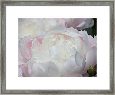 Framed Print featuring the photograph Peony by Karen Shackles