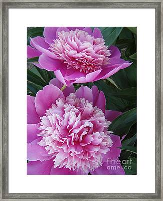 Framed Print featuring the photograph Peony by Kristine Nora