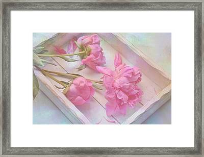 Peonies In White Box Framed Print