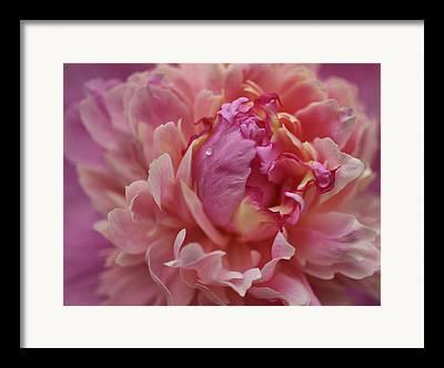 Indiana Flowers Photographs Framed Prints