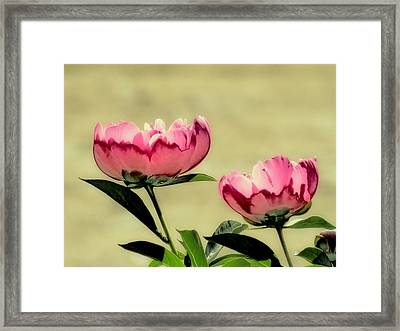 Peony Pair - Enhanced Framed Print