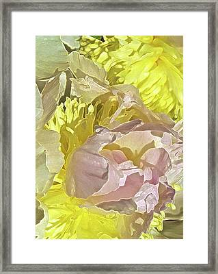 Peony Perfect Framed Print by Gwyn Newcombe