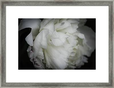 Peony Profile Framed Print