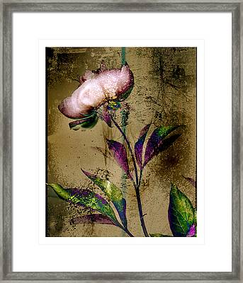Peony Redux Framed Print by Geoff Ault