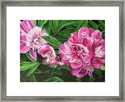 Peony Trilogy Framed Print by Lee Nixon
