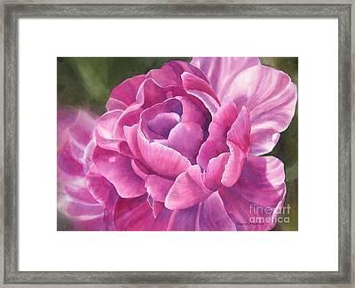 Peony Tulip Framed Print by Sharon Freeman