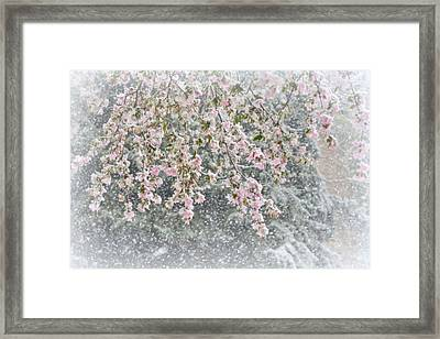 Peppermint Spring Framed Print