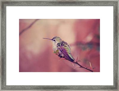 Perch Framed Print by Laurie Search