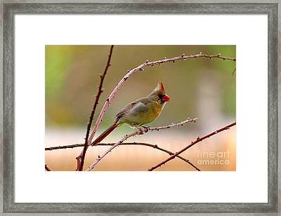 Perch Of Thorns Framed Print