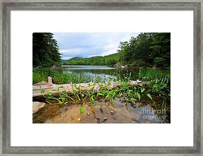 Perch Pond  Framed Print by Catherine Reusch Daley