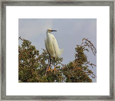Framed Print featuring the photograph Perch by Robert Pilkington