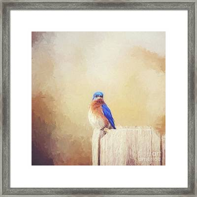 Perched And Pretty - Digital Painting Framed Print