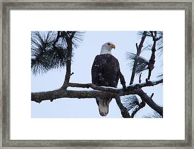 Perched And Proud  Framed Print
