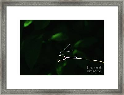 Perched Framed Print by Brian Kalbe