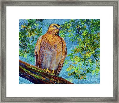 Perched Hawk Framed Print