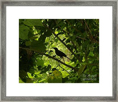 Perched In Green  Framed Print by Jack Norton