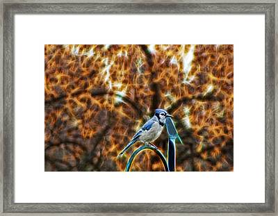 Framed Print featuring the photograph Perched Jay by Cameron Wood