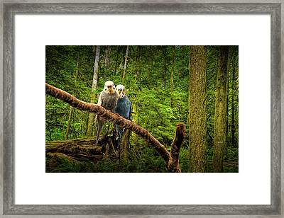 Perched Parakeets Framed Print by Randall Nyhof