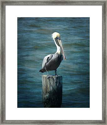 Perched Pelican Framed Print by Carla Parris