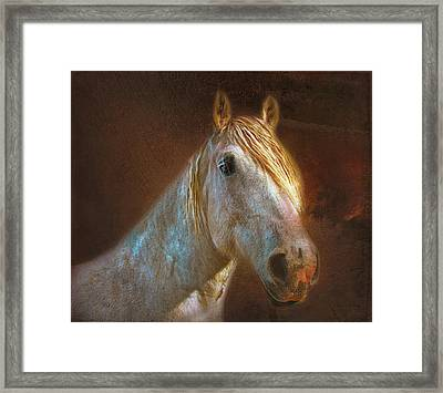 Percheron  Framed Print by Bellesouth Studio