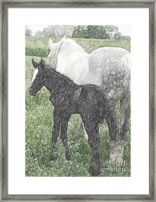 Percheron Colt And Mare In Pasture Digital Art Framed Print