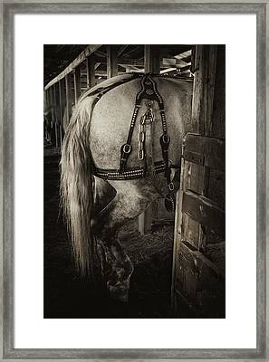 Percheron Draft Horse Framed Print by Theresa Tahara