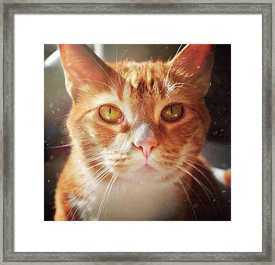 Percy In The Sun Framed Print