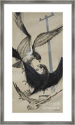Peregrine Falcon And Kestrel Framed Print