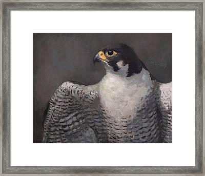 Peregrine Falcon Framed Print by Attila Meszlenyi