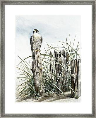 Peregrine Falcon On Post Framed Print by Dag Peterson