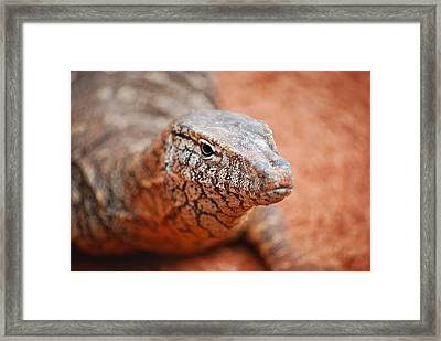 Perentie Close Up Framed Print by Michelle Wrighton