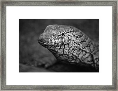 Perentie Monitor Lizard - Black And White Framed Print by Michelle Wrighton