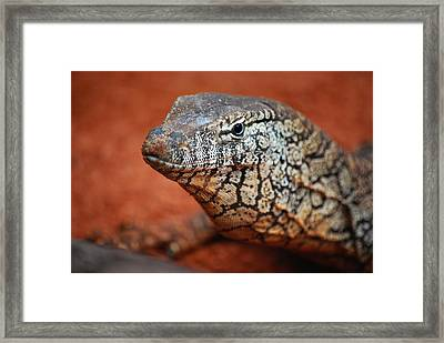 Perentie Monitor Lizard Color Framed Print by Michelle Wrighton