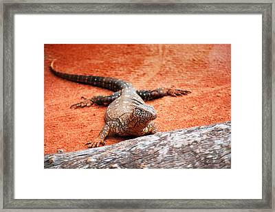 Perentie Monitor Lizard Framed Print by Michelle Wrighton