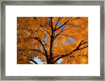 Perfect Autumn Day With Blue Skies Framed Print by James BO  Insogna
