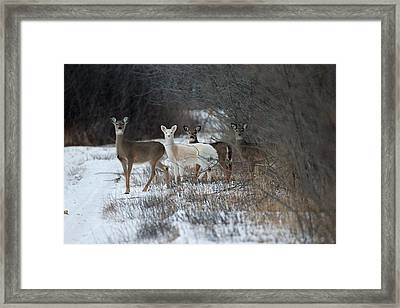Perfect Blend Framed Print by Brook Burling