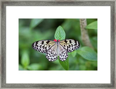 Framed Print featuring the photograph Perfect Butterfly Pose by Raphael Lopez