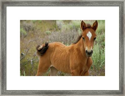 Perfect Diamond Framed Print