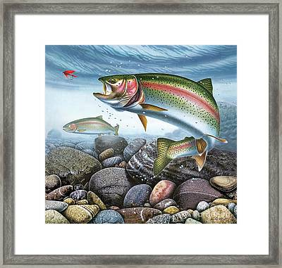 Perfect Drift Rainbow Trout Framed Print