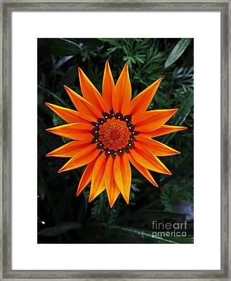 Perfect Flower  Framed Print by Jasna Gopic