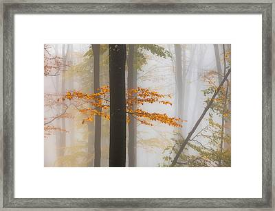 Perfect Forest Framed Print