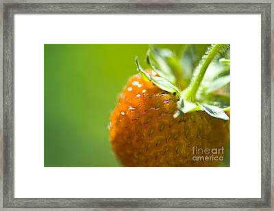 Perfect Fruit Of Summer Framed Print by Heiko Koehrer-Wagner