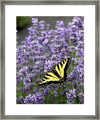 Perfect Imperfection Framed Print by Marie Neder