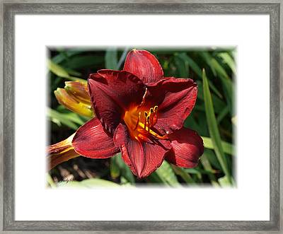 Perfect Lily Framed Print by Judy  Waller