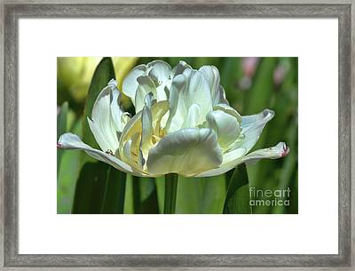 Perfect Love Framed Print by Diana Mary Sharpton