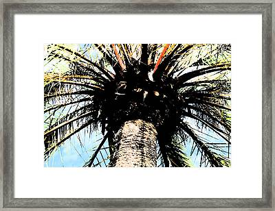 Perfect Palm Framed Print by Nanette Hert