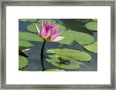Perfect Paradise Framed Print