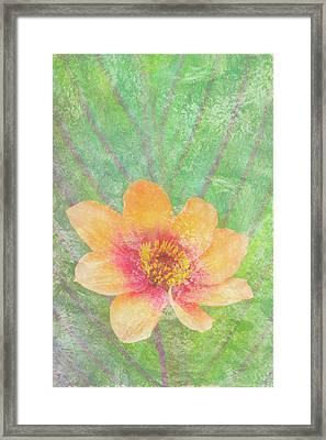 Perfect Peach Framed Print by JQ Licensing